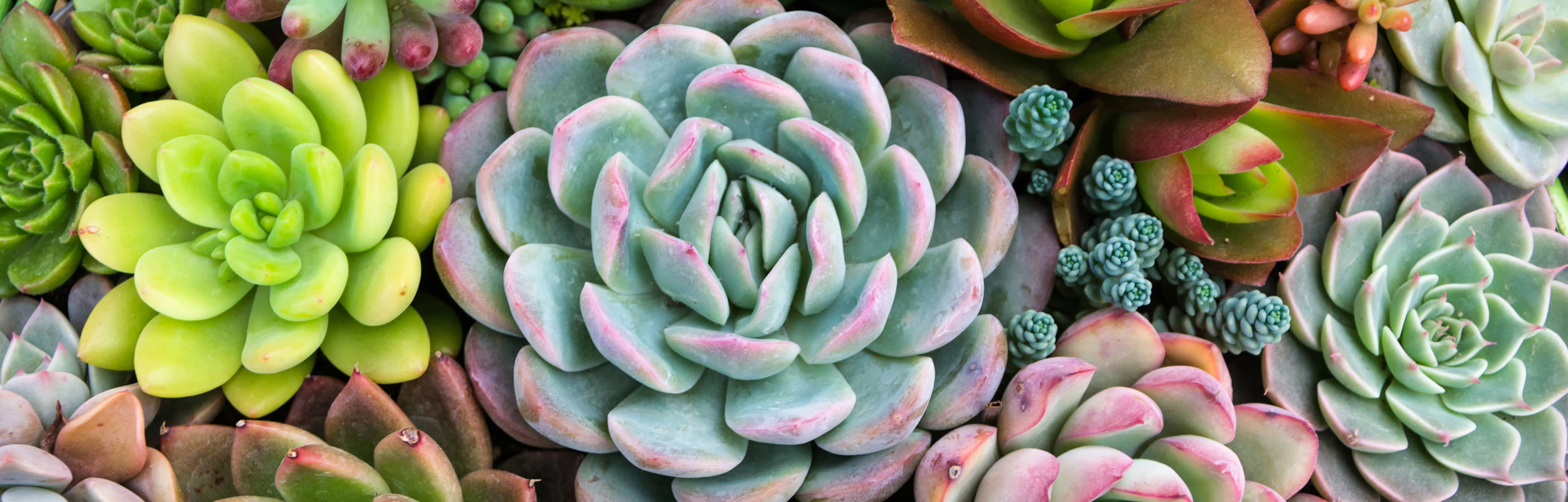Rectangular arrangement of succulents; cactus succulents in a pl